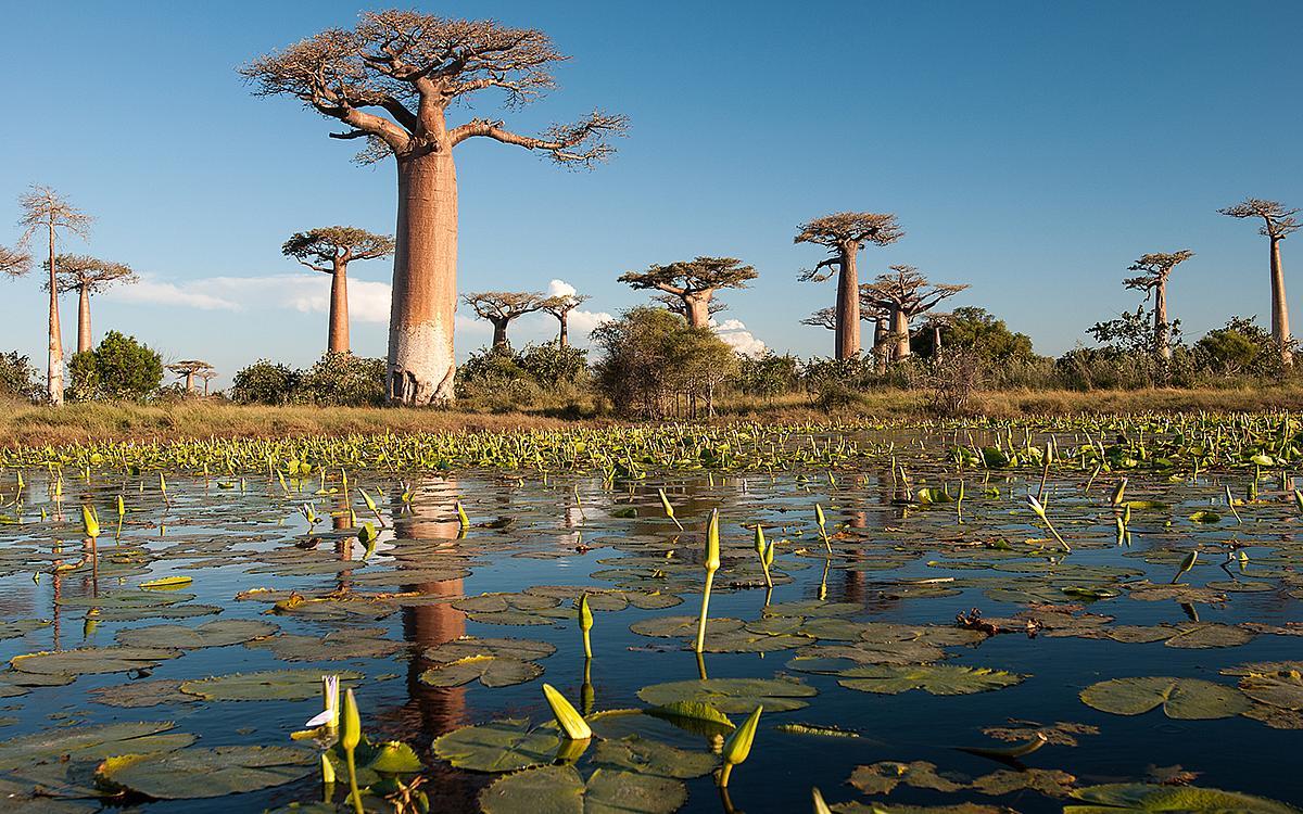 Madagaskar News